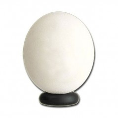 Huevo de Avestruz Fresco