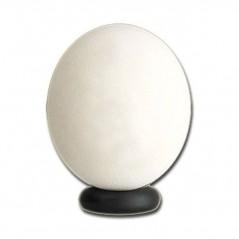 Huevo de Avestruz Vacío